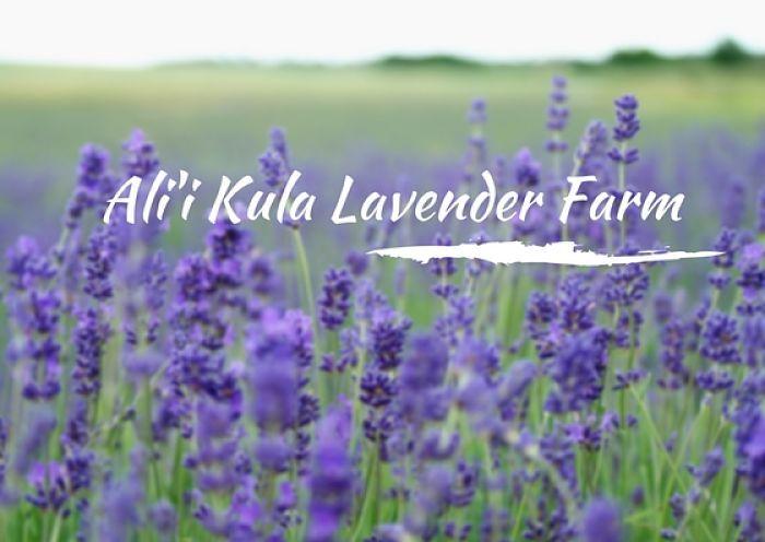 Things To Do And See On Maui Ali I Kula Lavender Farm