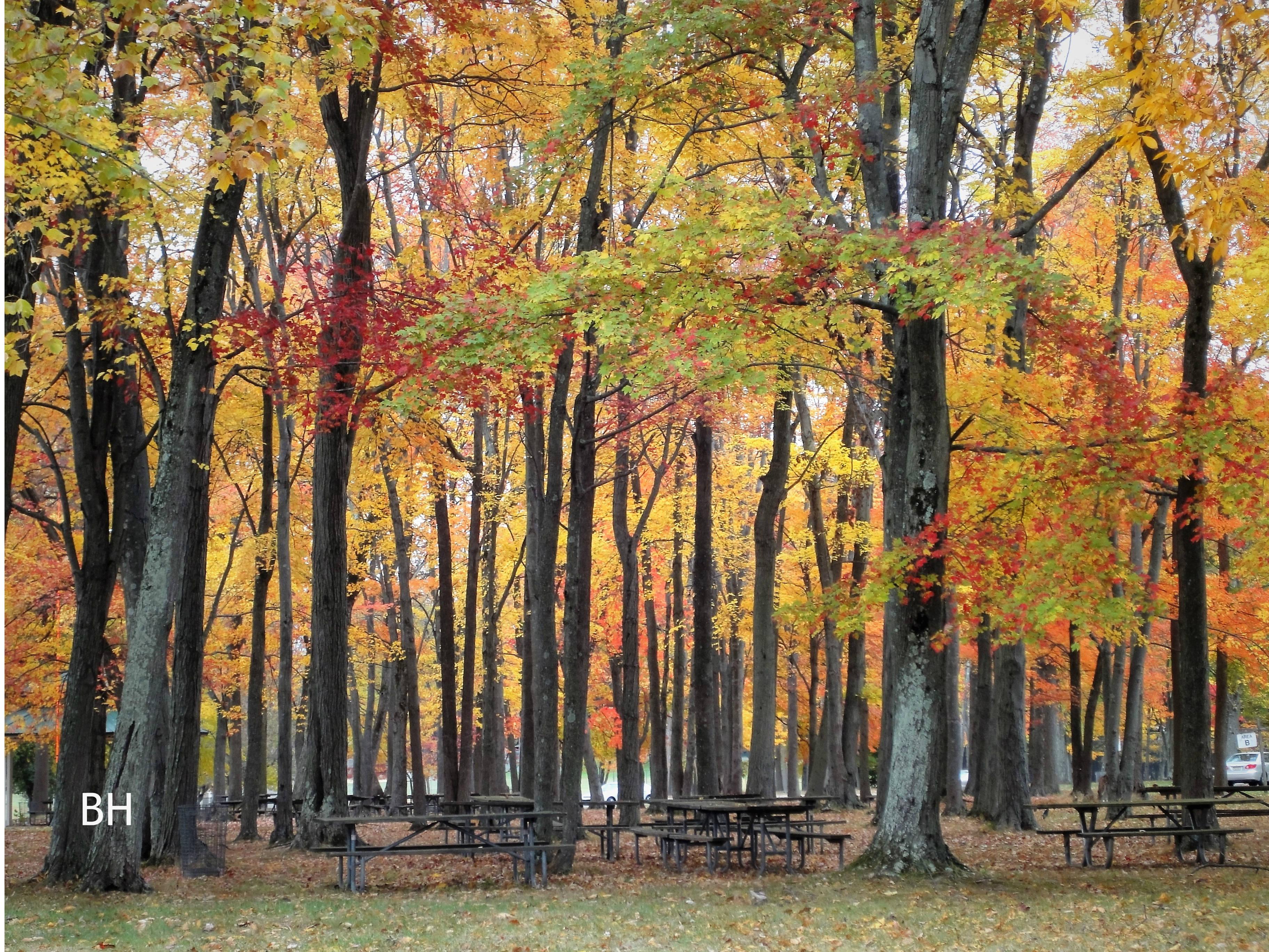bergen county nj fall days leaf peeping in new jersey