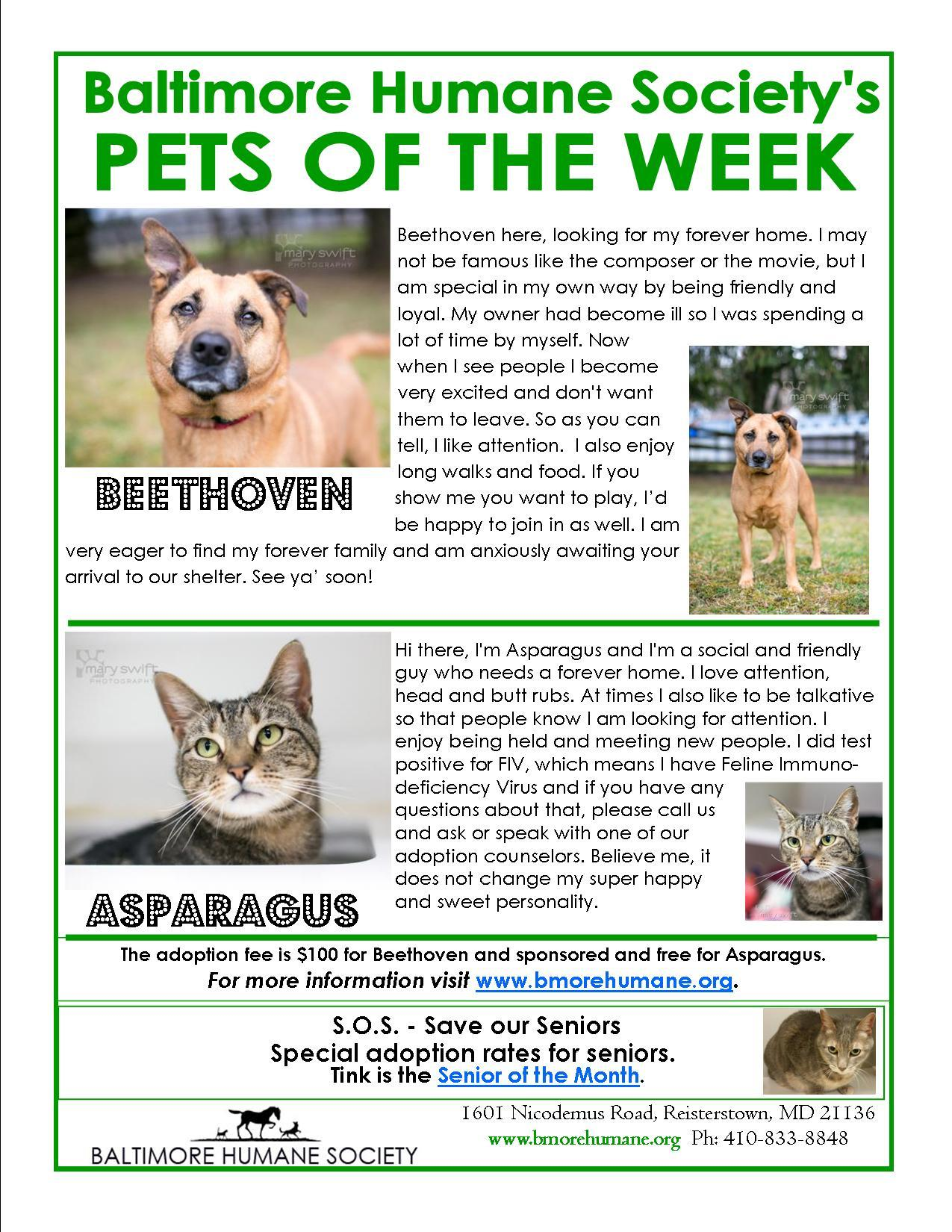 Asparagus and Beethovan Pets for adoption