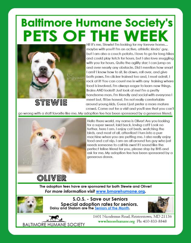Pet adoption Baltimore stewie oliver