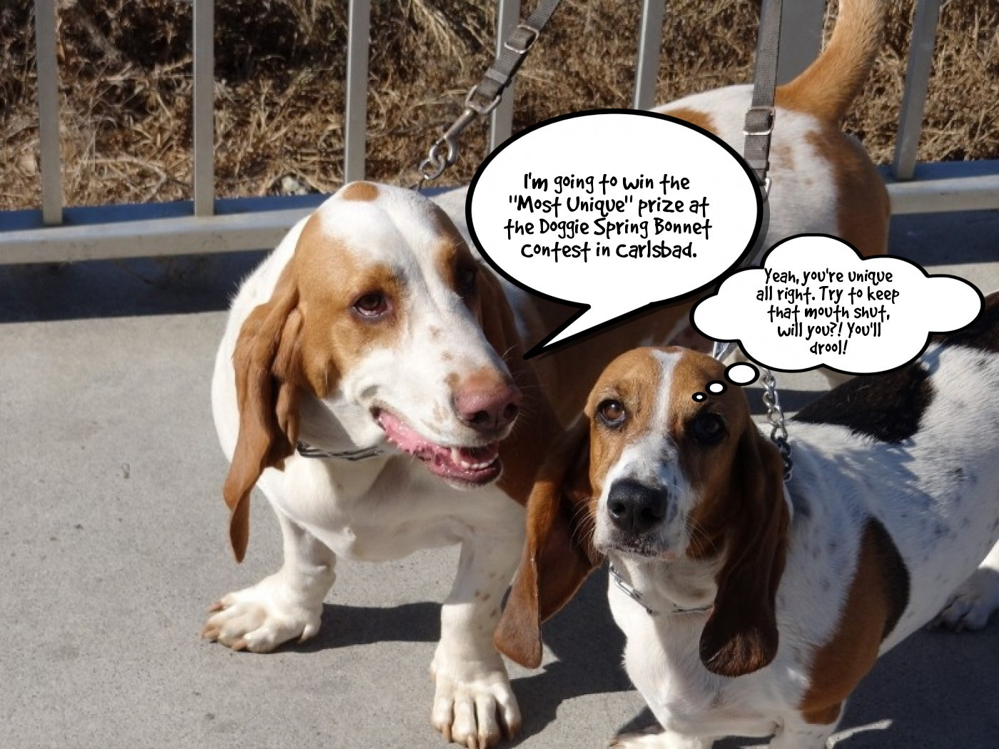 Bassets and Doggie Spring Bonnet Contest