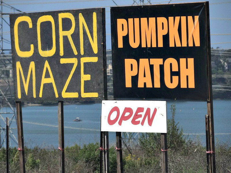 Carlsbad Pumpkin Patch and Corn Maze now open