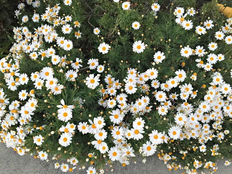 San Diego Spring Home Garden Show 2017 Del Mar Ca