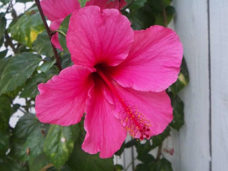 2015 San Diego Spring Home Garden Show In Del Mar Ca