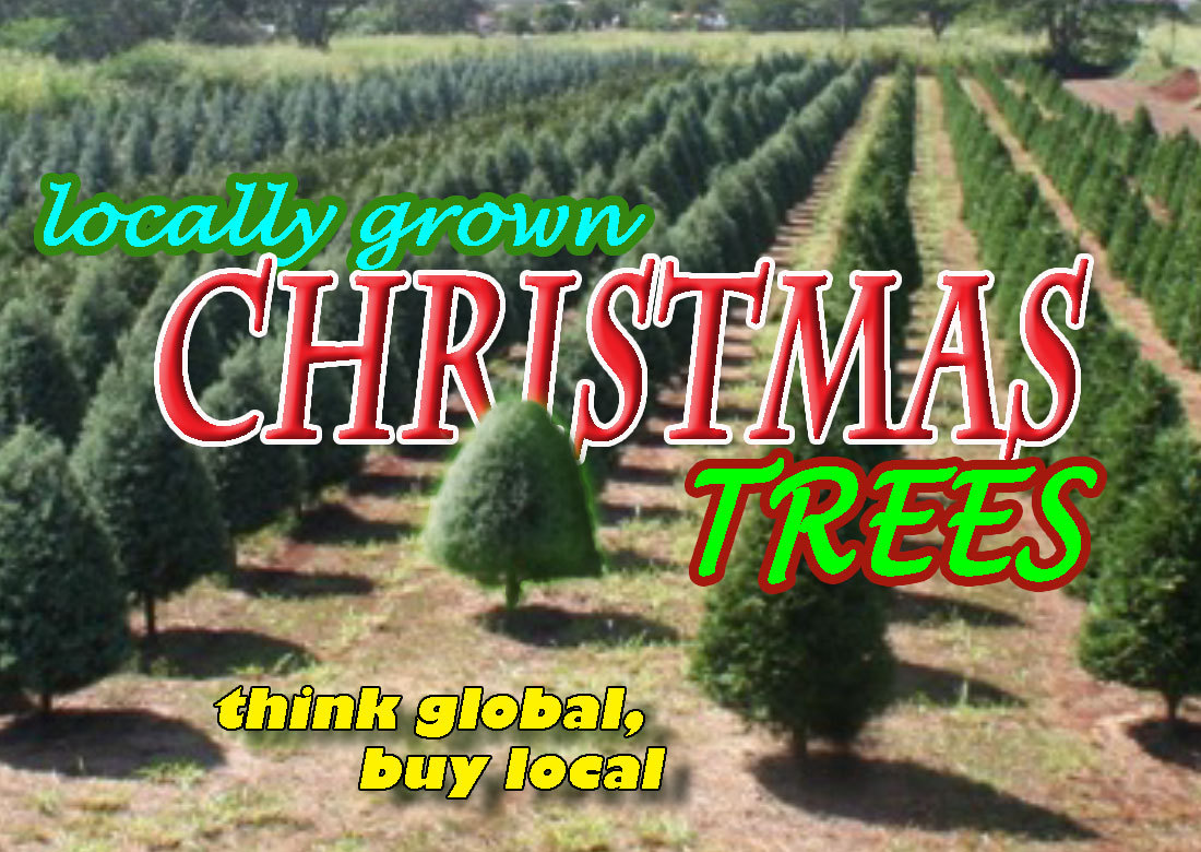 Local Christmas Trees