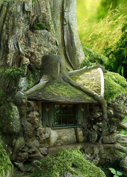 Houses Each Have Their Own Story So Do Trees