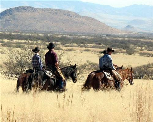 Horse ranches in Arizona