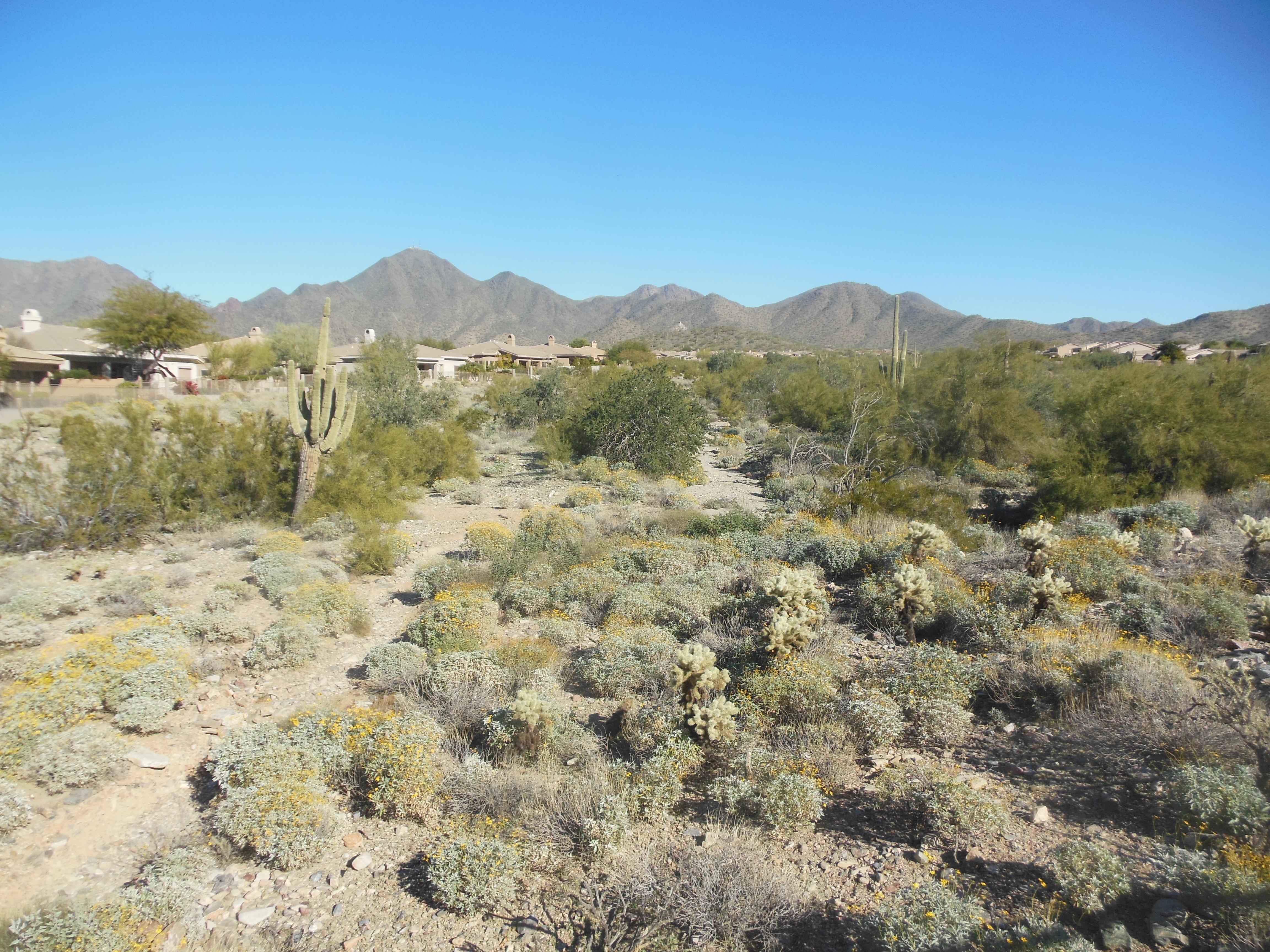 Hiking Trail McDowell Mountain Ranch