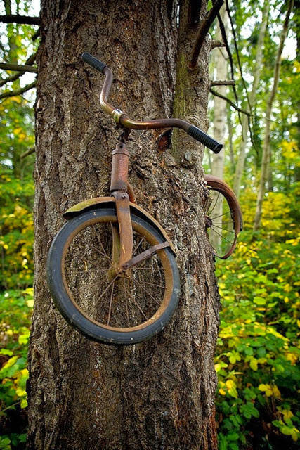 Boy left his bike chained to a tree when he went to war in 1914