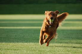 Dog Parks in Volusia County - Joyce Marsh Homes