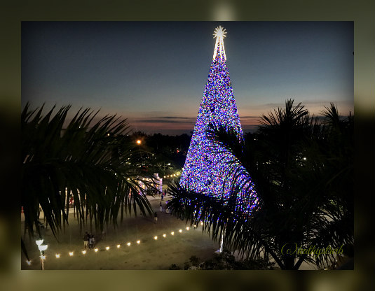 100 foot christmas tree delray beach