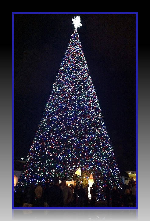 Don't Miss the 100 Ft Christmas Tree Lighting Ceremony-