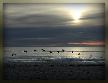 birds flying over the beach at delray