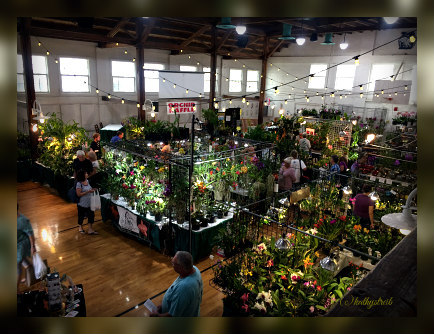 delray orchid show at old school square