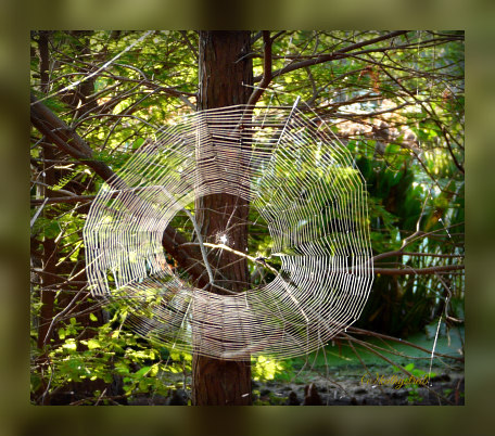 spider web at green cay