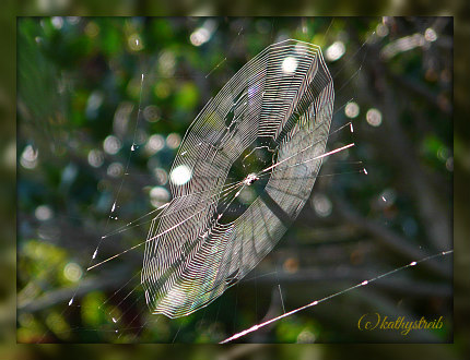 spider web green cay