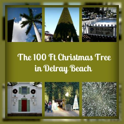 the 100 foot Christmas Tree- Delray Beach & Itu0027s the 100 Ft Christmas Tree Lighting Ceremony in Del