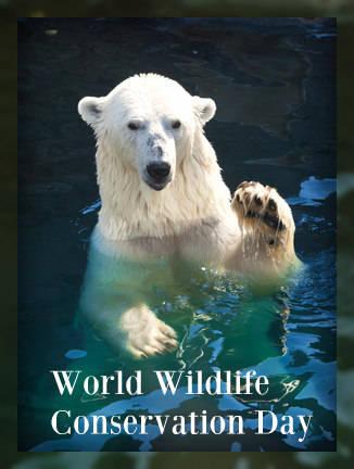 Image result for world wildlife conservation day images