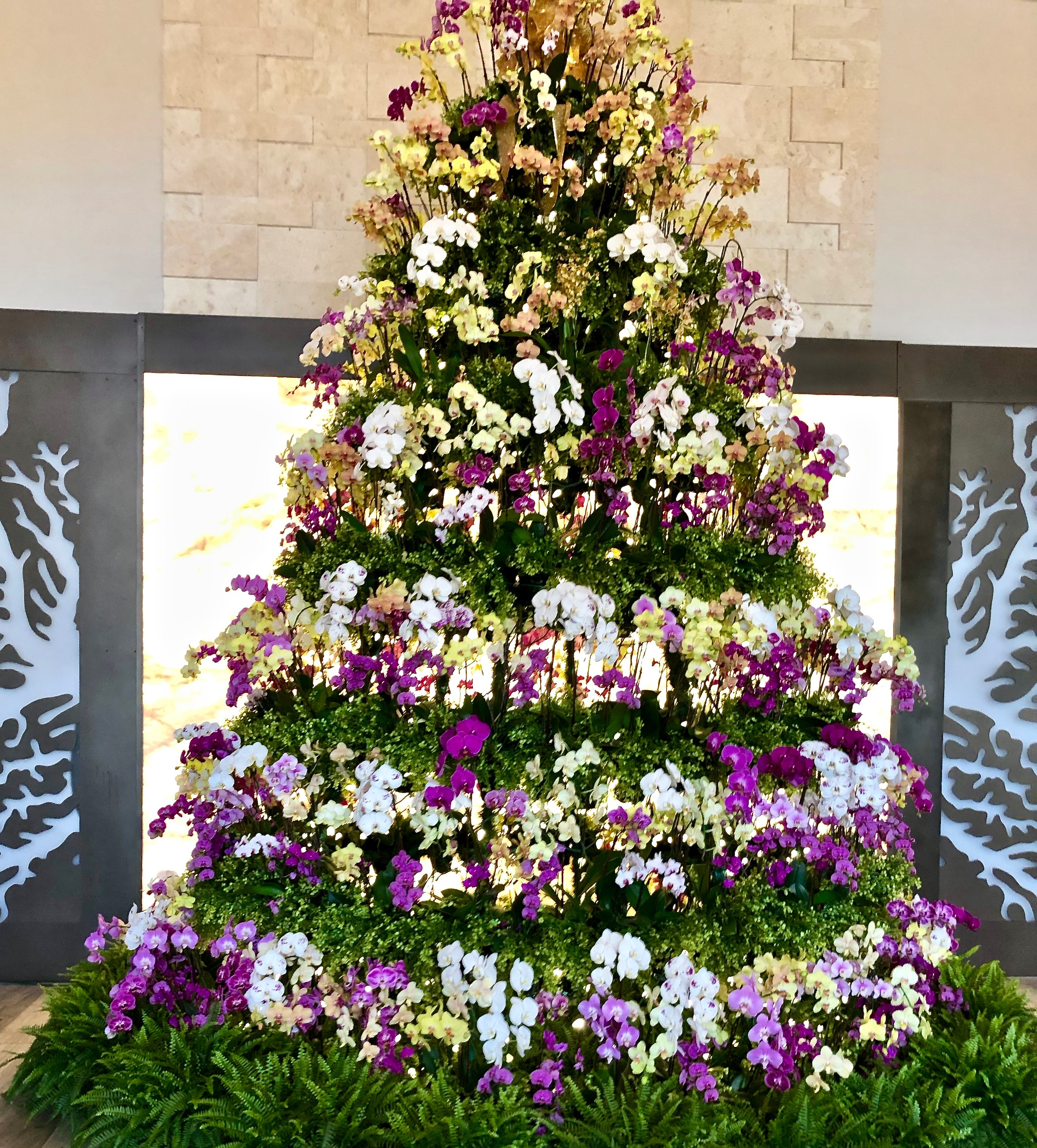 Orchid Christmas Tree.Wordfull Wednesday Key Largo Christmas Orchid Tree