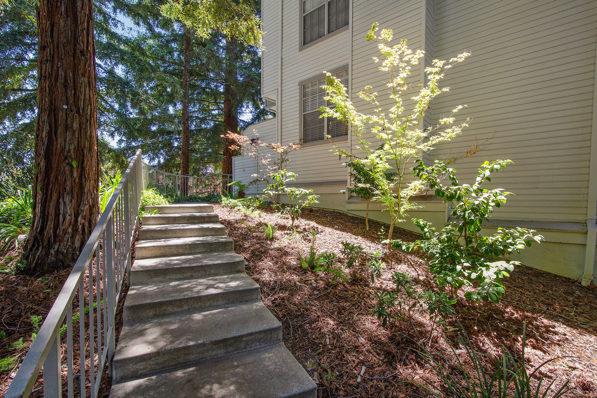 Tree-shaded entry to condo in Sunnyvale