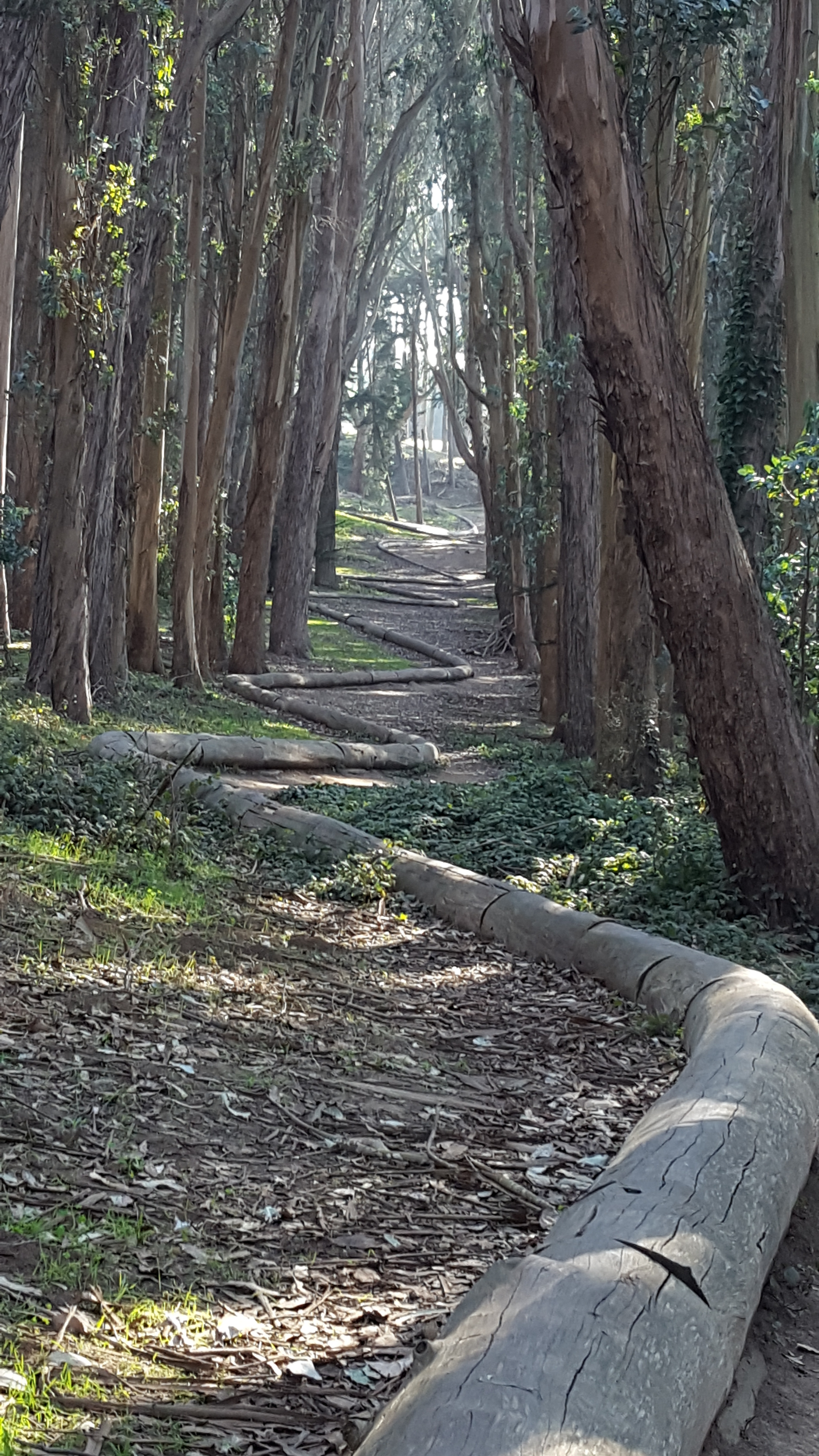 Treeline by Andy Goldsworthy, Presidio, SF