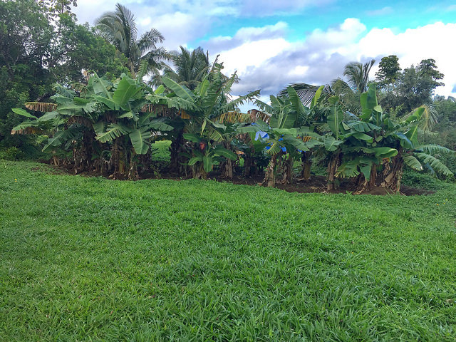 Haiku Maui vacant land sold in 2018