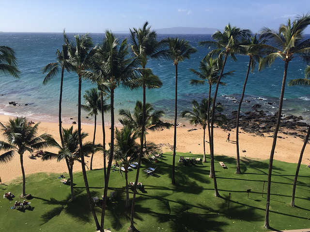 A lovely beach with palm trees, Kihei Maui Hawaii