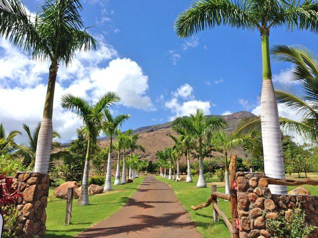 Beautiful driveway in Olowalu Mauka, West Maui