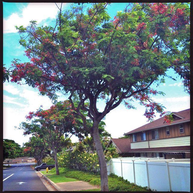 Kehalani entrance, Wailuku Maui HI