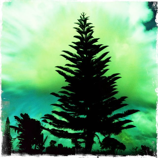 Holiday Tree Lighting at MauiWine
