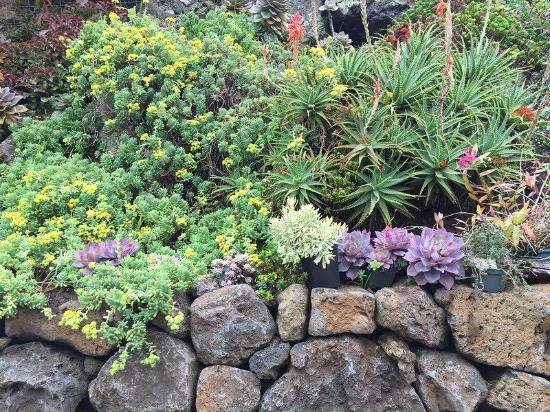 Succulent garden and rock walls at 890 Upper Kimo Drive