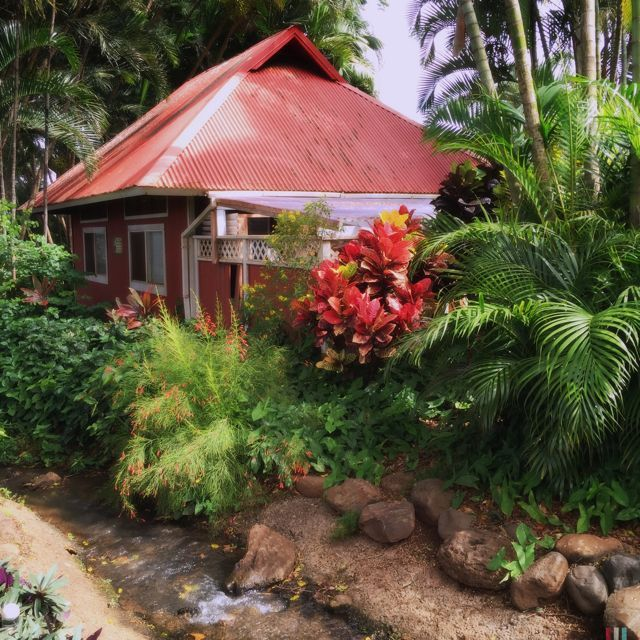 a little shack in the jungle on maui that 39 s all i wan