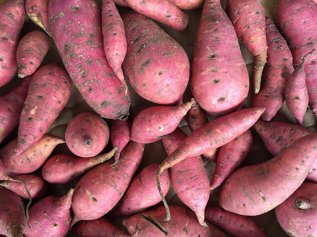 Sweet potatoes grown in Haiku Maui HI