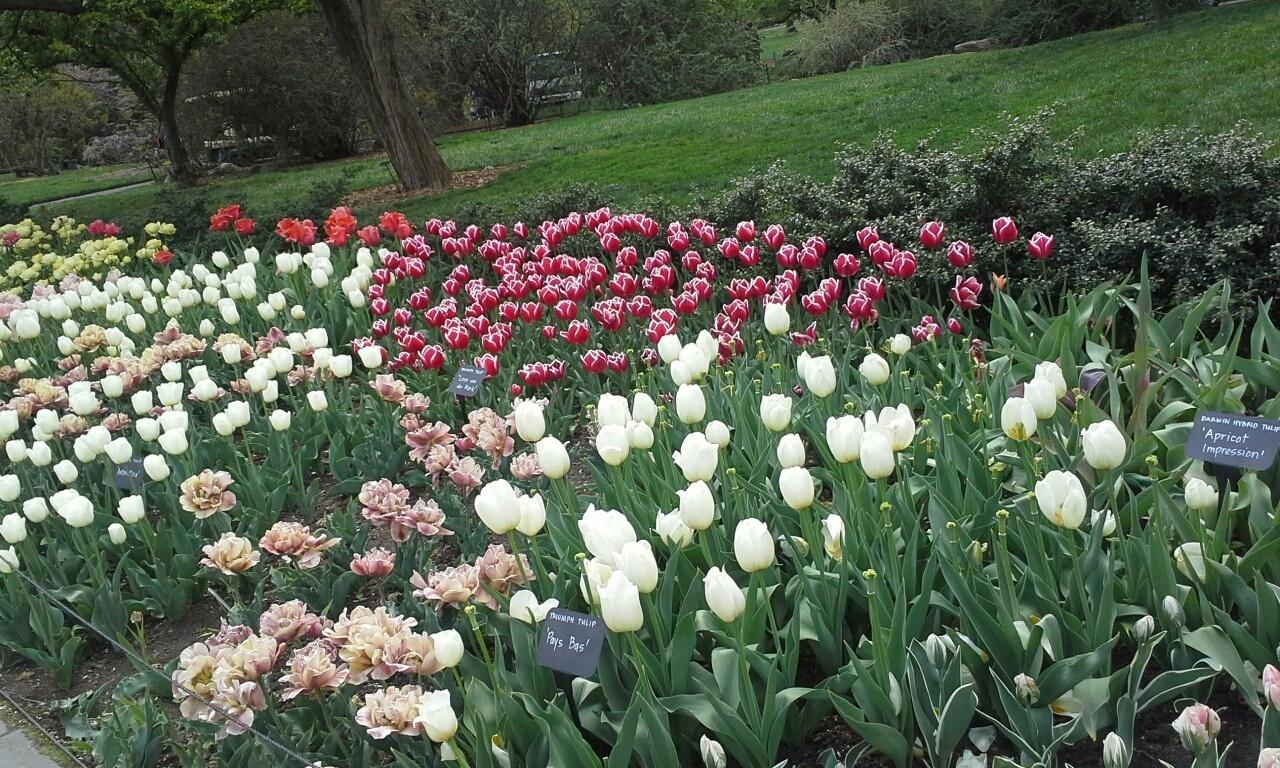 spring brooklyn botanic garden, real estate agent in brooklyn