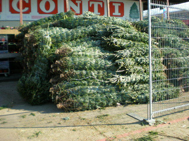 christmas tree disposal brooklyn