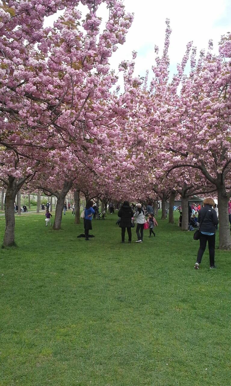 Saturdays Flatbush Brooklyn Photo Cherry Blossom Fes
