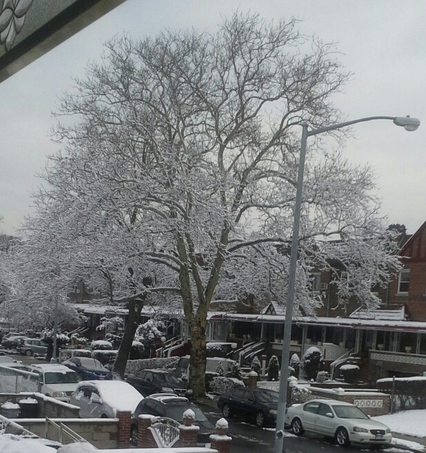 winter in brookyn, things to do, real estate agents in brooklyn