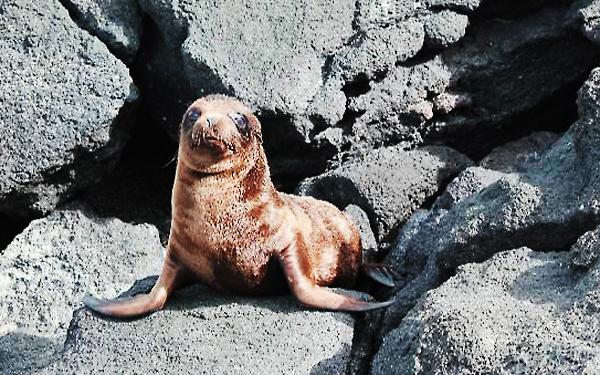 Sea Lion Pup awake