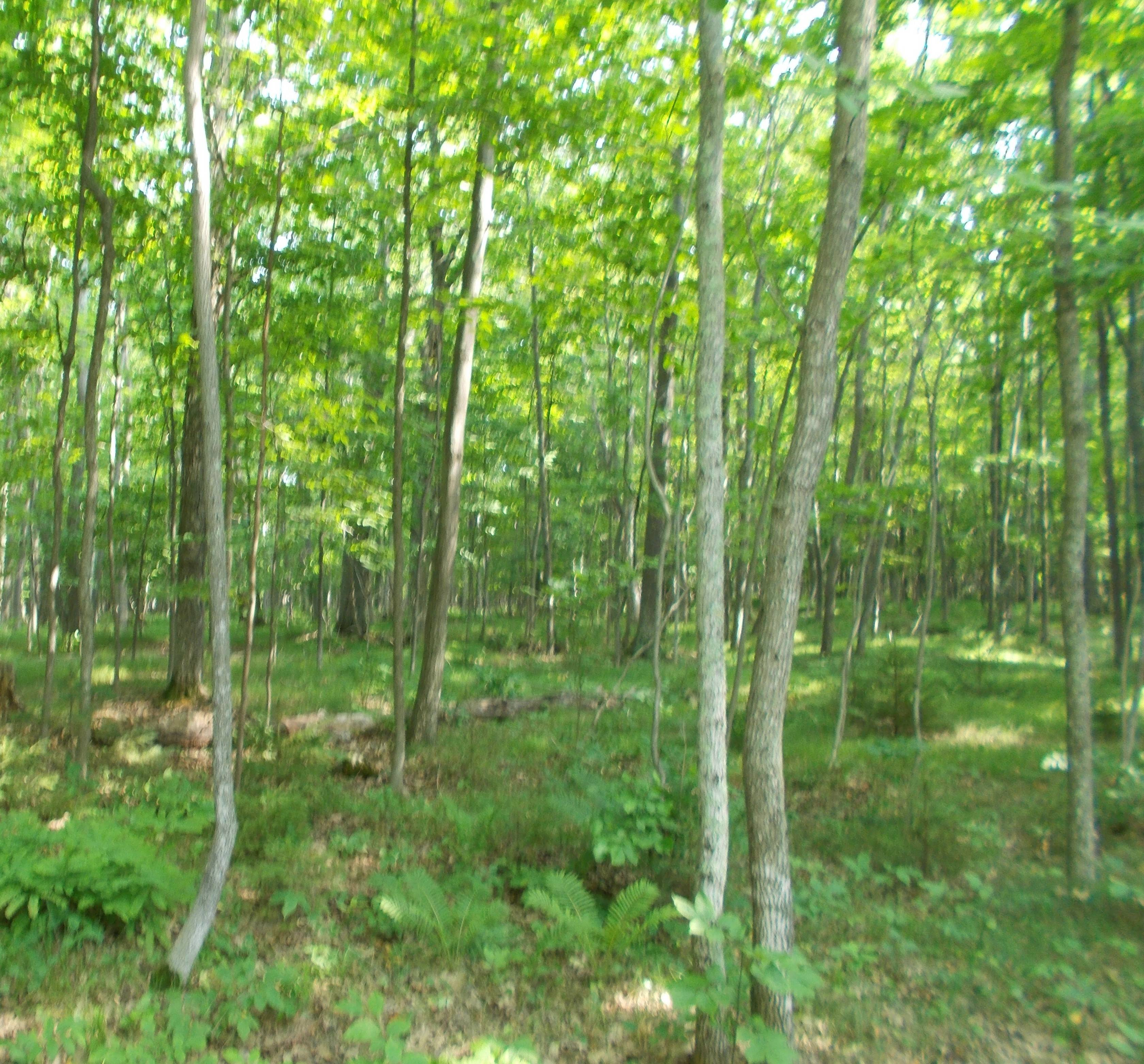 Door County S Mushroom House For Sale Reduced 100 000