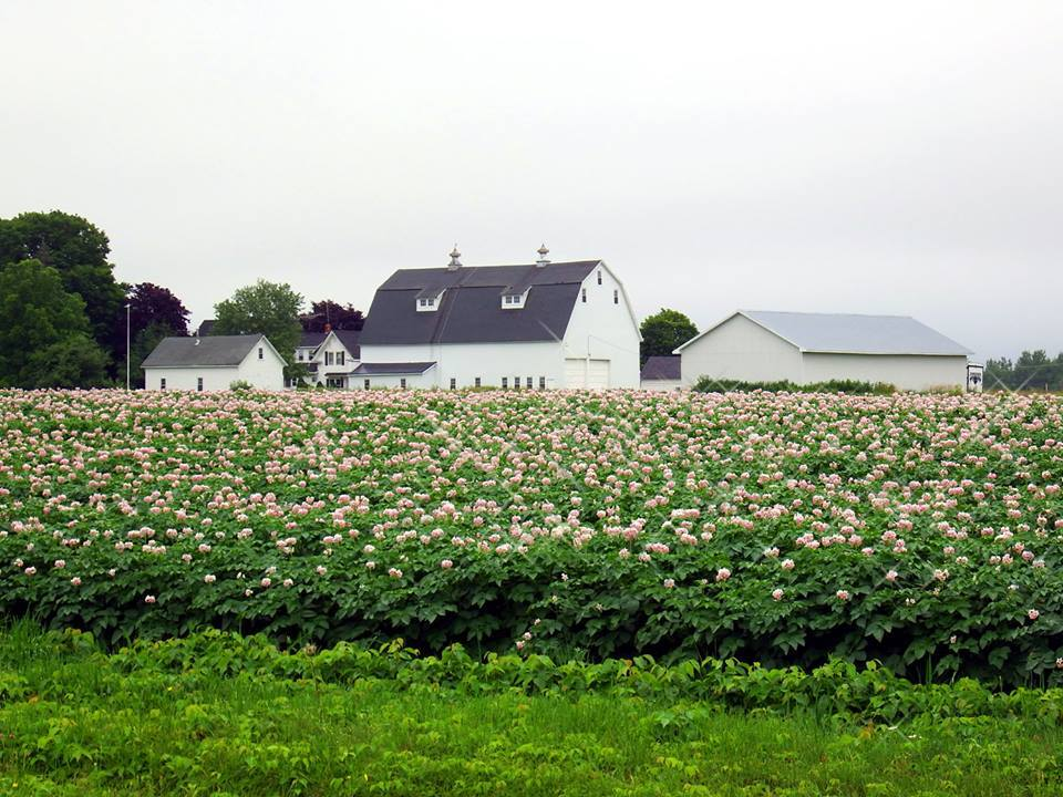maine farm photo