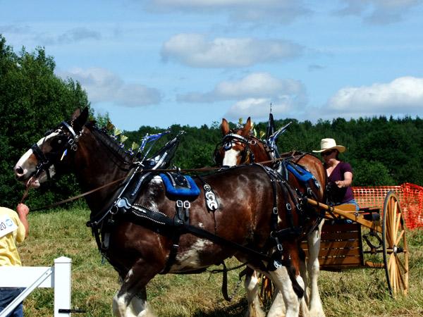 maine baby horse photo