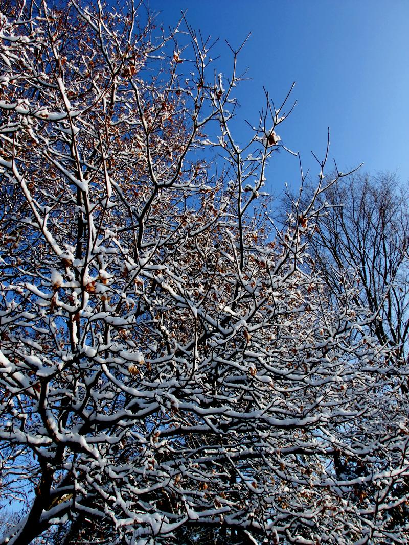 maine snow trees photo
