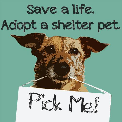Adopt A Shelter Pet In Charlotte, NC