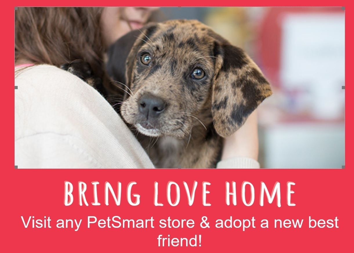 Adopt don't shop for a pet and bring love home