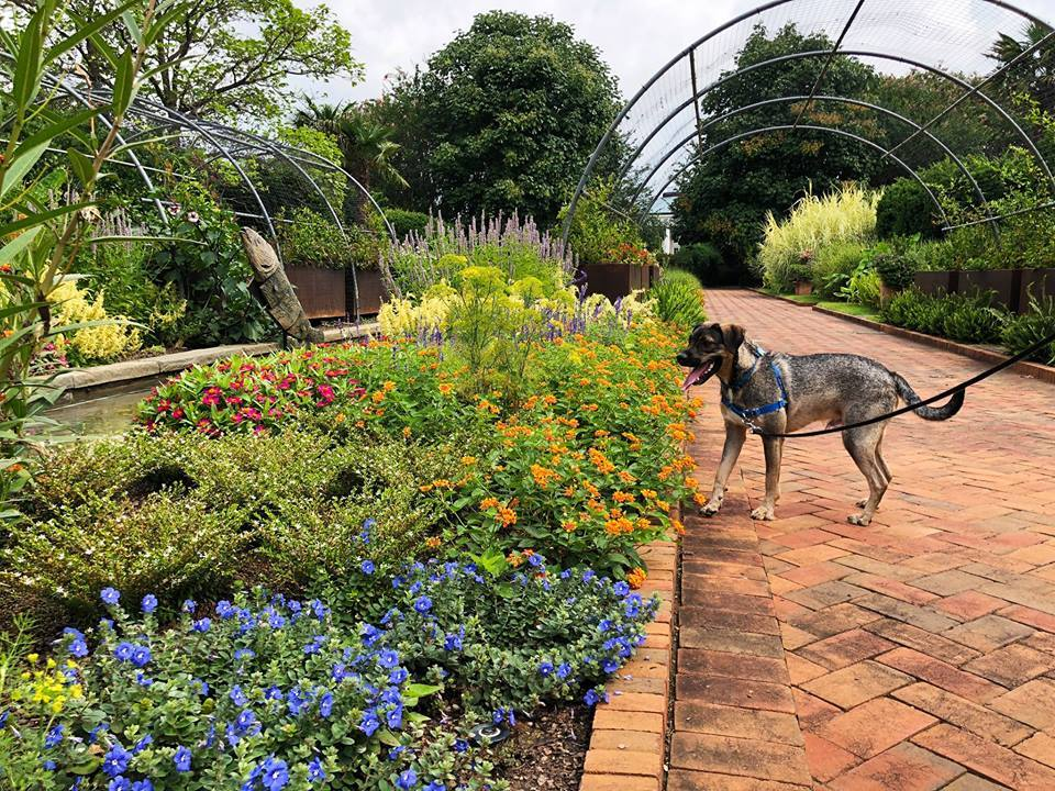 Pups & Perennials at Daniel Stowe Botanical Garden