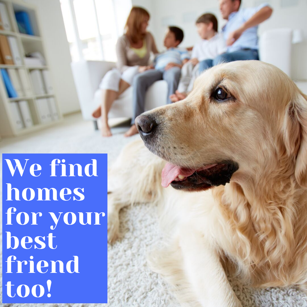 Carolinas Realty Partners Finds Homes For Your Best Friend