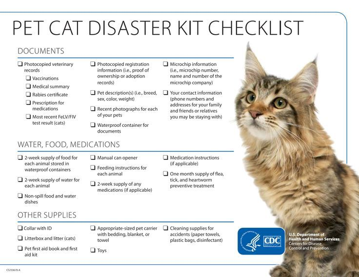 Disaster Checklist for Cats