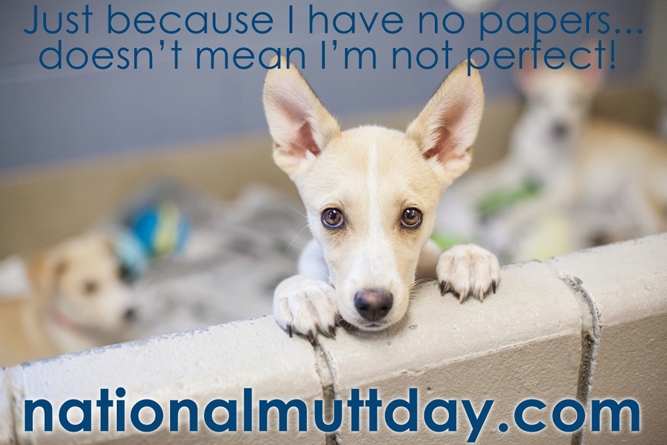 national mutt day July 31
