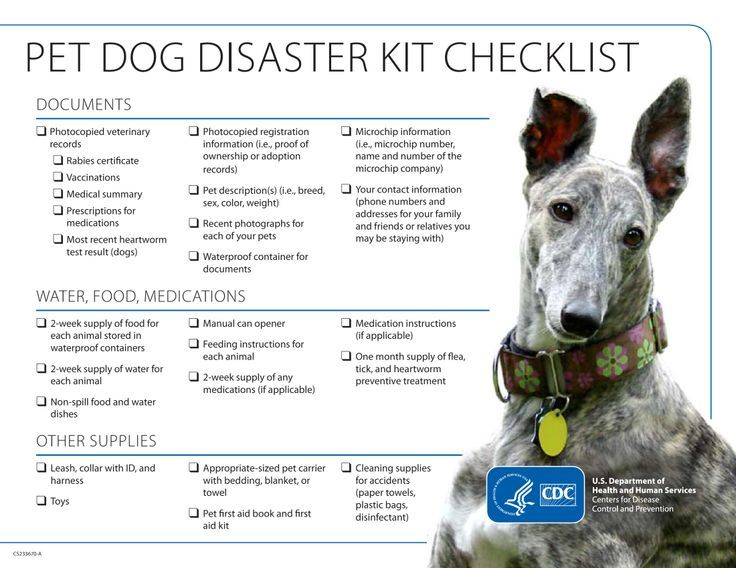 Dog Safety Checklist during disaster