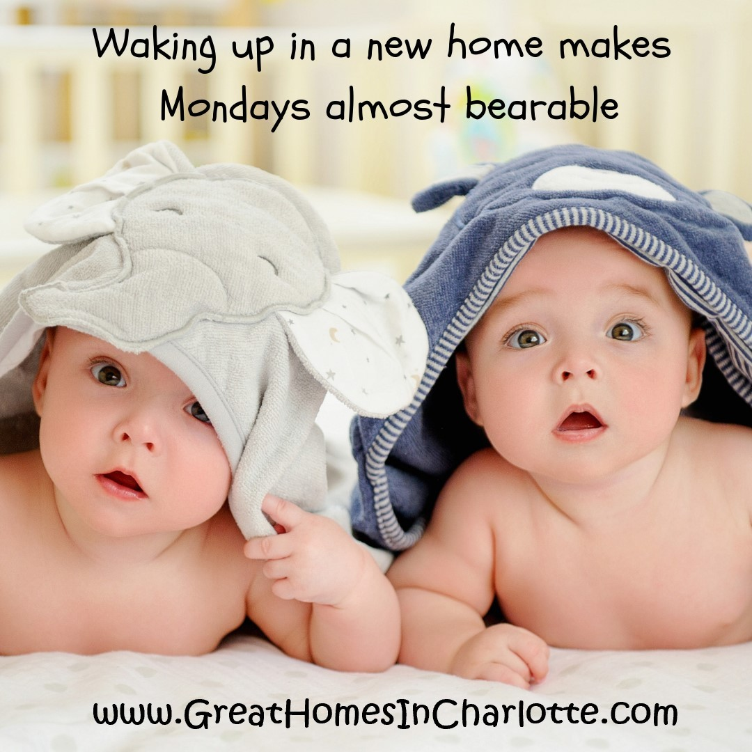 Search for your charlotte home at greathomesincharlotte.com and make Mondays bearable